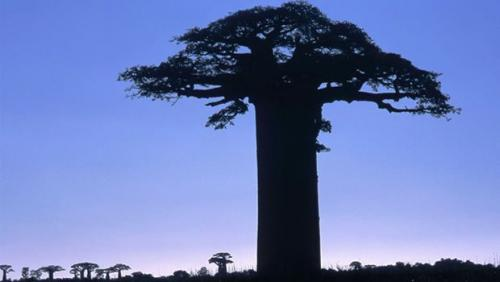 madagascar-Sècheresse et baisse de précipitations à Madagascar