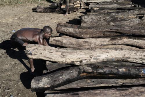 madagascar-Madagascar continue de fermer les yeux sur le trafic du bois de rose