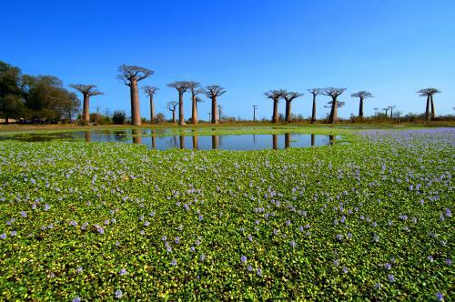 madagascar-Madagascar tarde à exploiter ses atouts