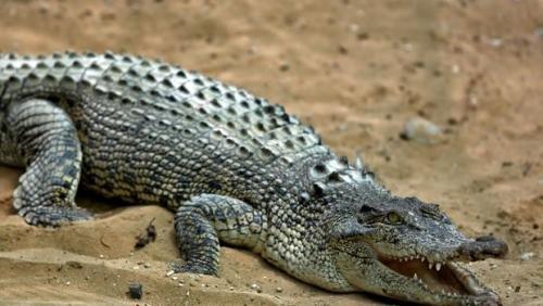 madagascar-Attaques de crocodile dans le Nord-Ouest de Madagascar