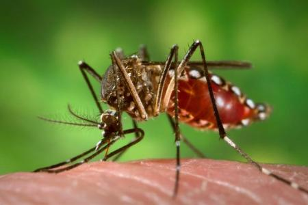 madagascar-Madagascar élabore un plan d'action contre le virus Zika