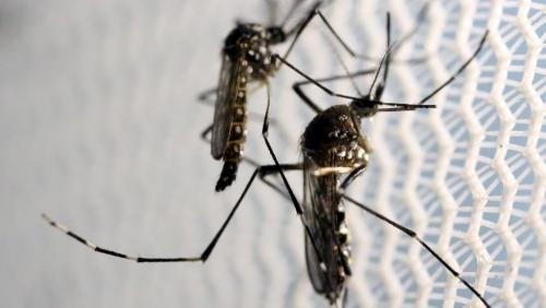 madagascar-Madagascar: un message d'alerte concernant le virus Zika crée la polémique