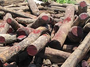 madagascar-Responsabiliser la population Malagasy à lutter contre l'exploitation illicite des ressources naturelles de Madagascar