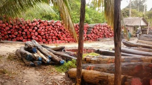 madagascar-Madagascar: des officiels comparaissent pour trafic de bois de rose