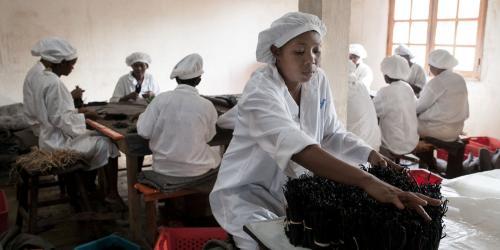 madagascar-Vanille de Madagascar, le goût amer de la spéculation
