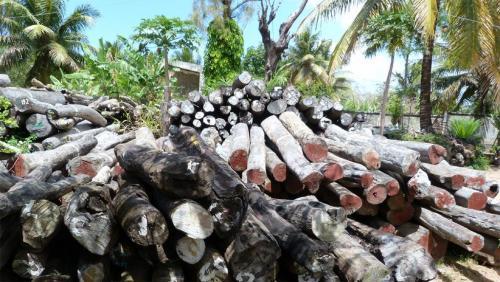 madagascar-Madagascar: un rapport alarmant sur le pillage des ressources naturelles